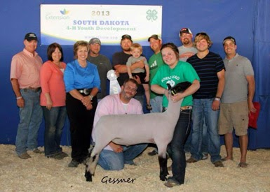 3rd Overall & Champion Wether 2013 South Dakota State Fair
