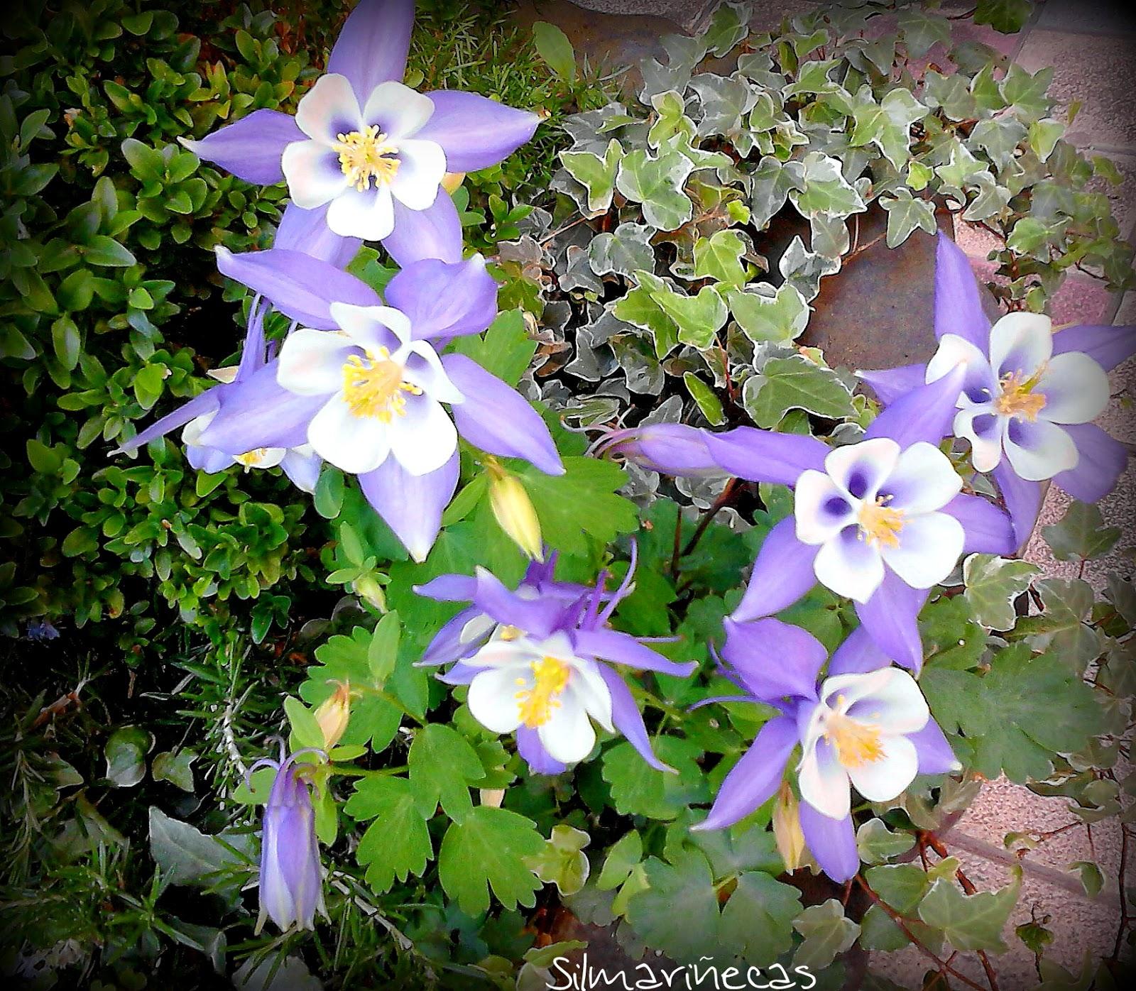 flores en el barrio-