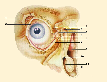Como arreglar la arruga profunda bajo los ojos