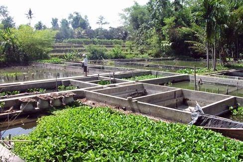 Usaha Di Desa Yang Paling Menguntungkan Dengan Modal Kecil