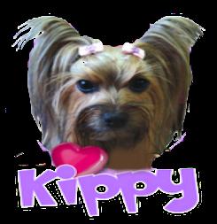 Promoter assistente Kippy