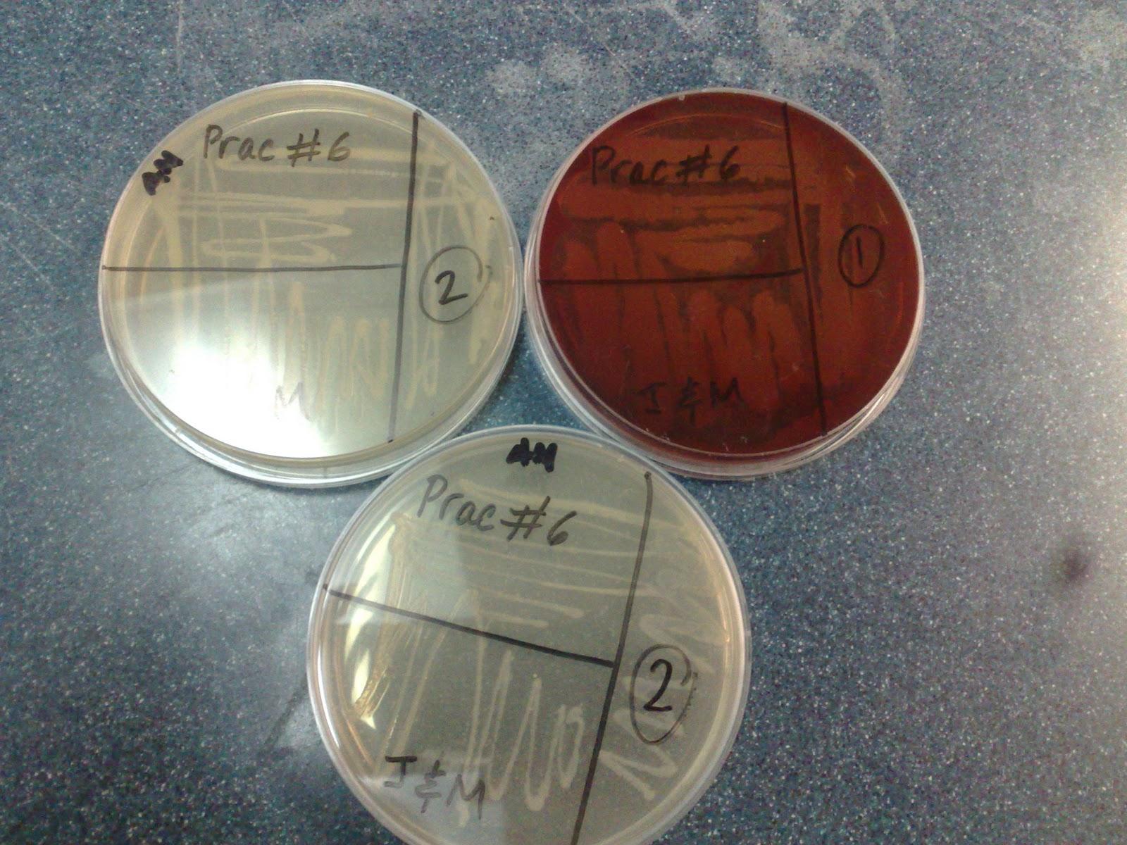 Laboratorio De Microbiologia Aislamiento De 2