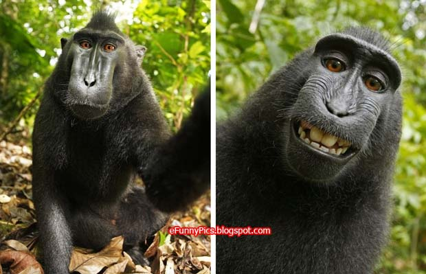 Monkey makes self-portrait