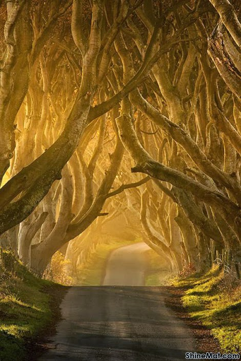 Antrim tree tunnel, Ireland