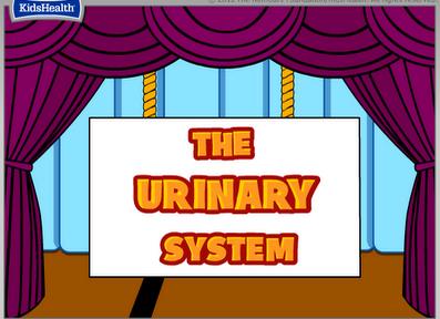 http://santi-profe.blogspot.com.es/2012/10/urinary-system-unit-2.html