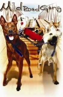 Những Chú Chó Bất Hạnh - Mid Road Gang