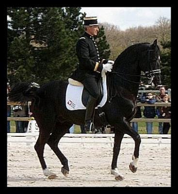 mes amis les chevaux 11 09 11