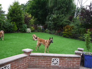 Dogs enjoying their new play area