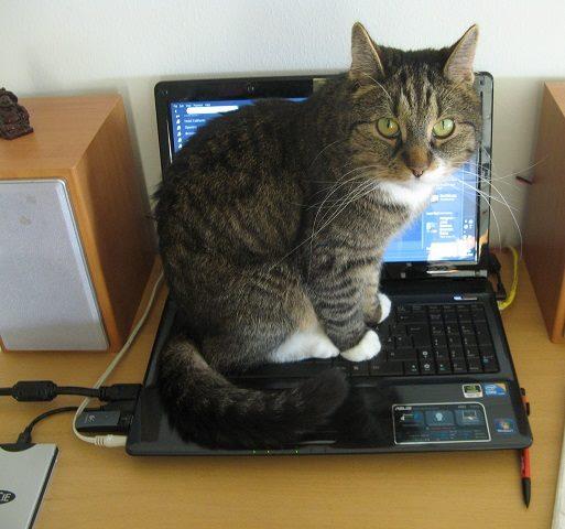 Kissa istuu läppärin päällä