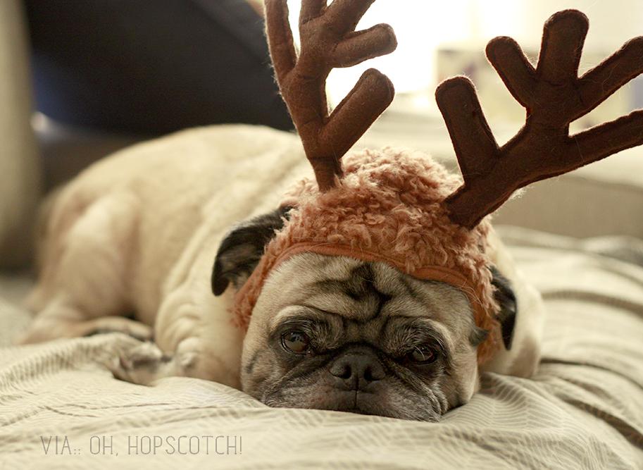 Reindeer Antler Hoodie Reindeer Antlers Dog