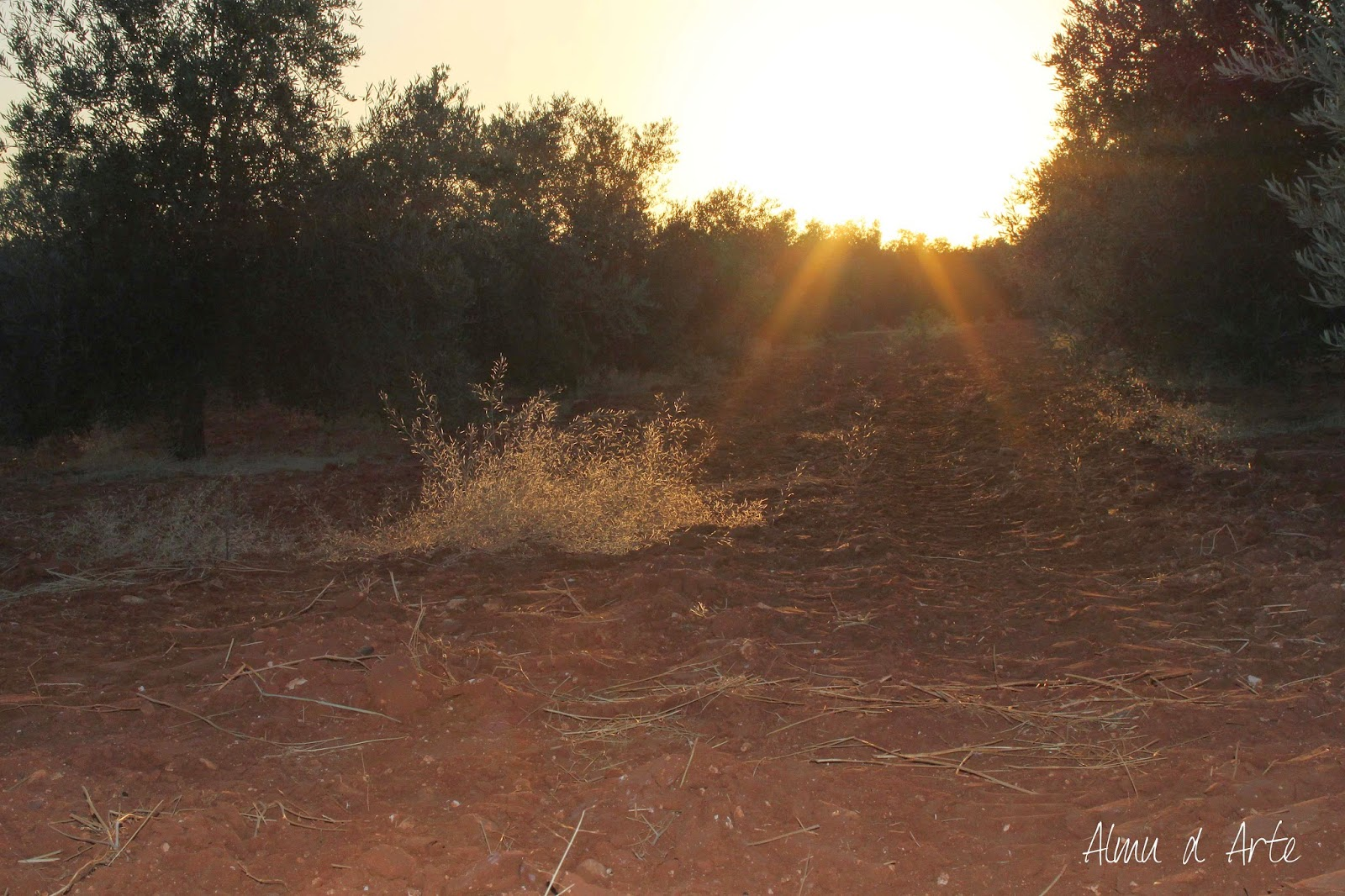 Atardecer en tierras andaluzas