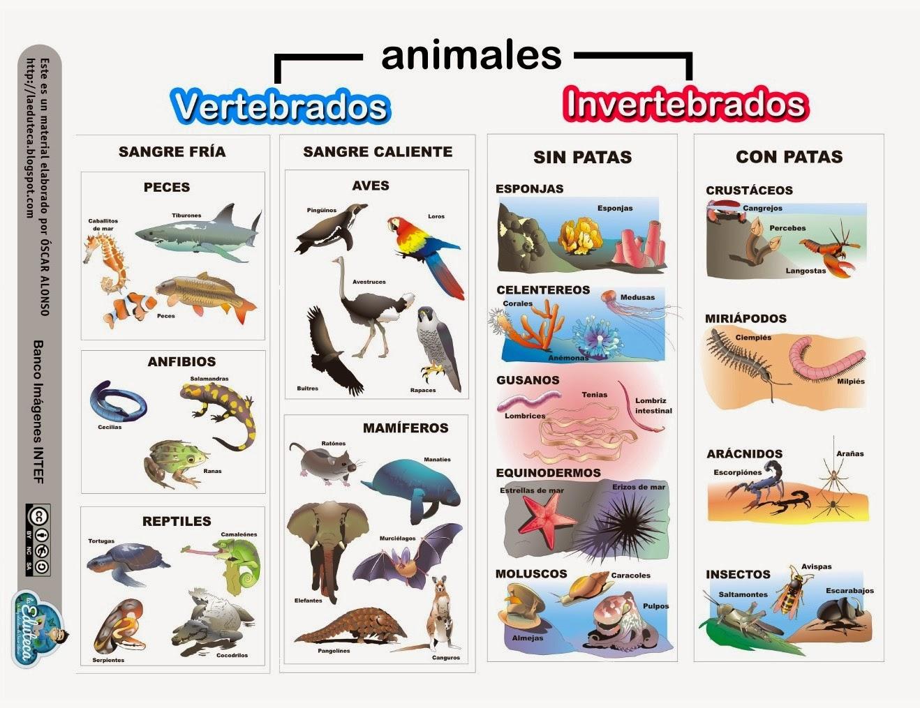 LOS ANIMALES: Conocemos a los animales.
