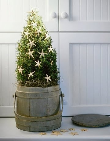 potted mini Christmas tree in old pail