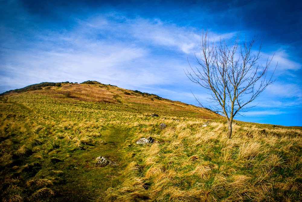 Tree in the middle of hiking arthur's seat edinburgh