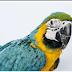 Hercule the Parrot: An Unexpected Detective