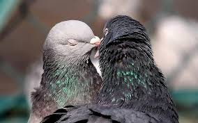 bird kiss photo