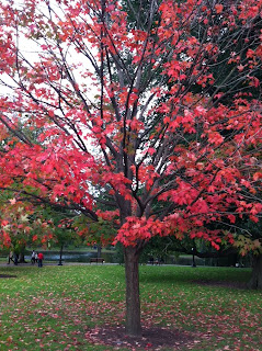 Boston Common fall
