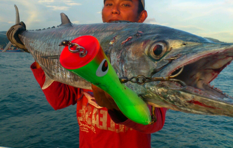 Fishing Giant Spanish Mackerel