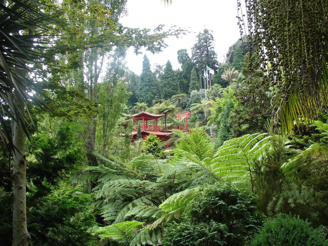 El guardi n del bosque jardines interiores y tropicales - Plantas tropicales para jardin ...