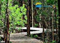 mangrove pulau karimunjawa