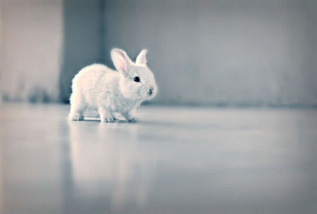 Cute white rabbit ~ Funny pictures