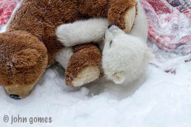 rescued baby polar bear1