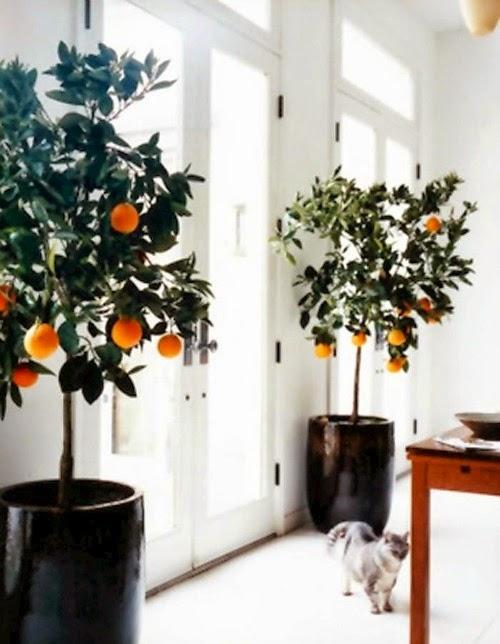 dream home details - citrus plants