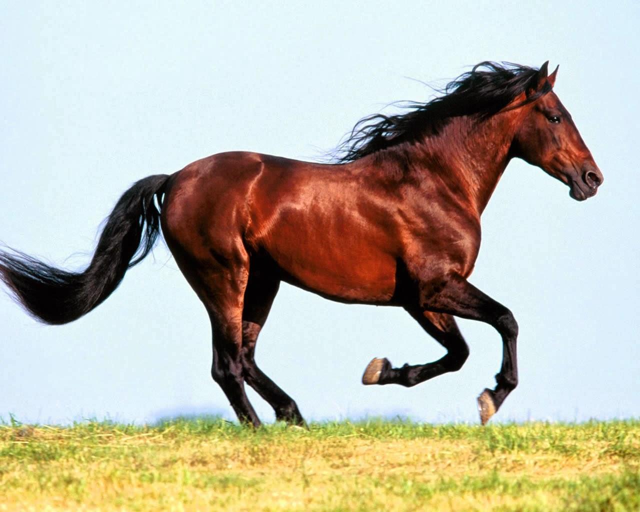 running-horse