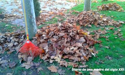 colores ocres rastrillar autumn leaves