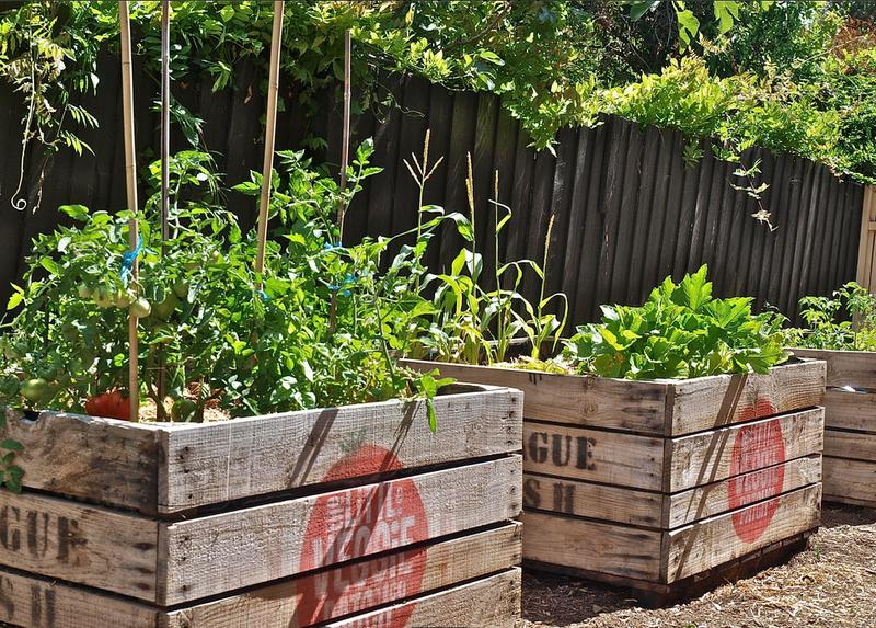 Tracie Ellis Design Little Veggie Gardens