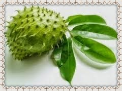 Soursop Leaves Benefits