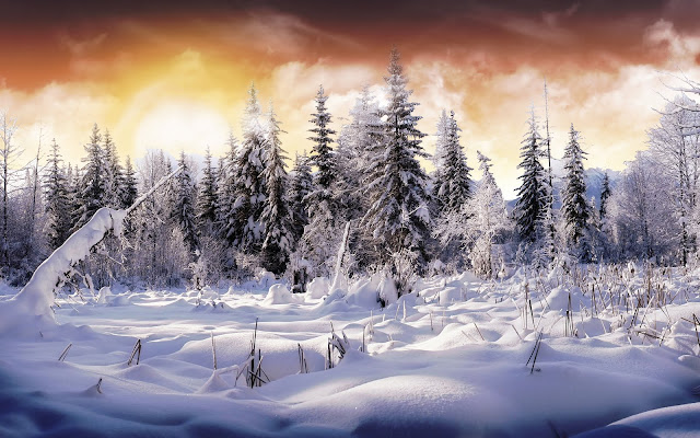 nature snow wallpaper