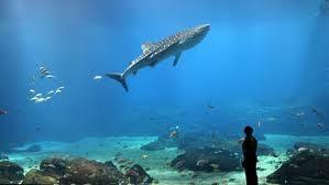 akuarium terbesar di dunia4