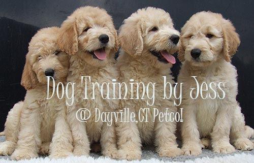 Dog Training @ Dayville,CT  Petco