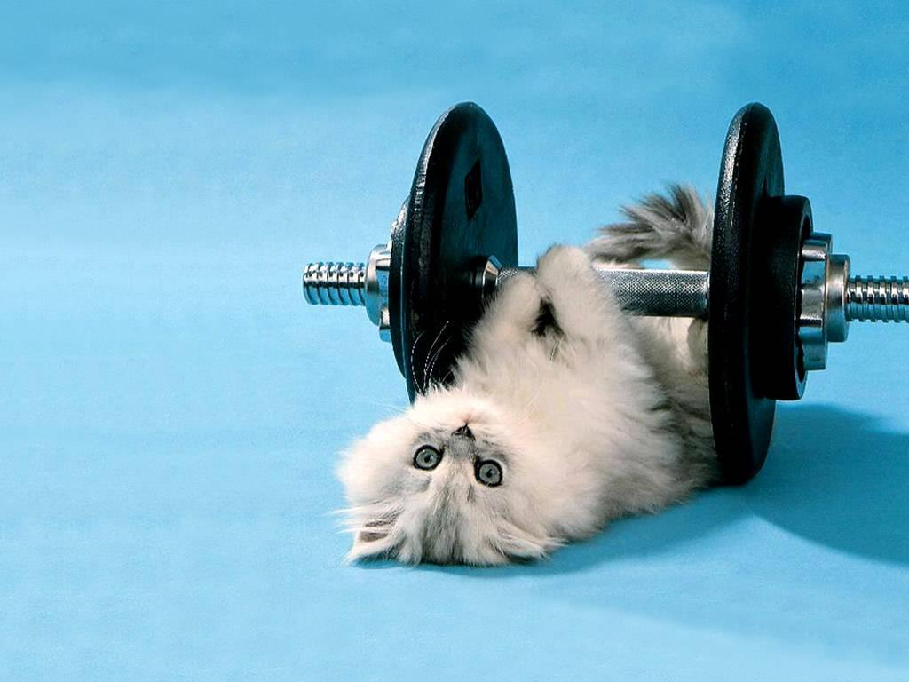 Wallpaper download mast - Cat Funny Kitten Lifting Weights Backgrounds Wallpaper