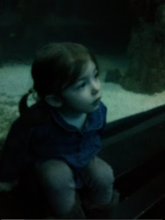 Looking at the sharks