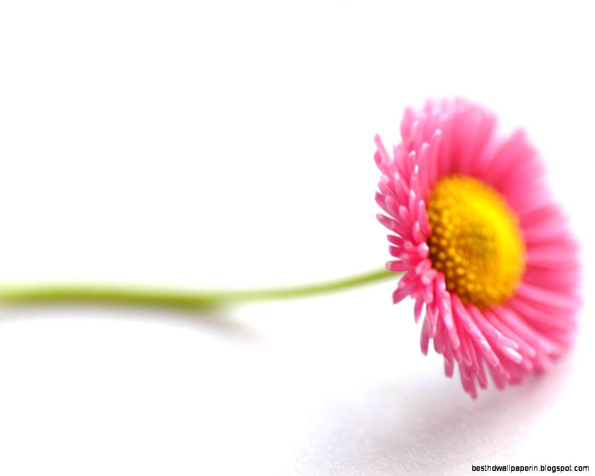 beautiful flower hd wallpaper | best hd wallpapers