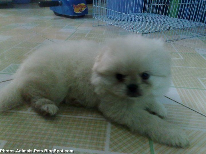 White puppy cute