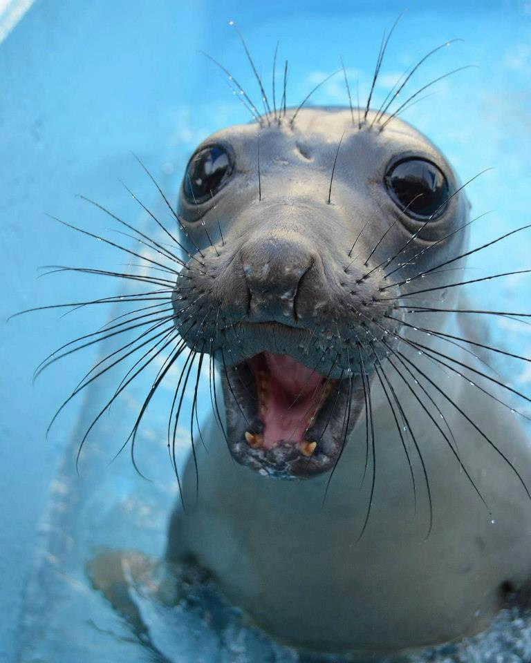 funny animals, animal pictures, baby seal