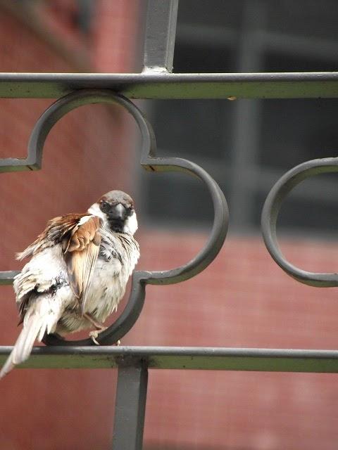 pássaro observa fotógrafo