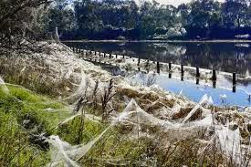 Horor! Ada Hujan Laba-laba di Australia