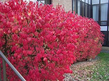 Fall In Poughkeepsie