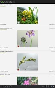 plant net bitki tanıma programı