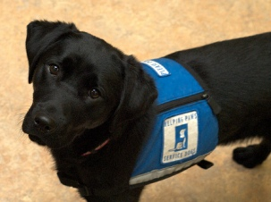 Service dogs to help them get through their day therapy dogs bring a