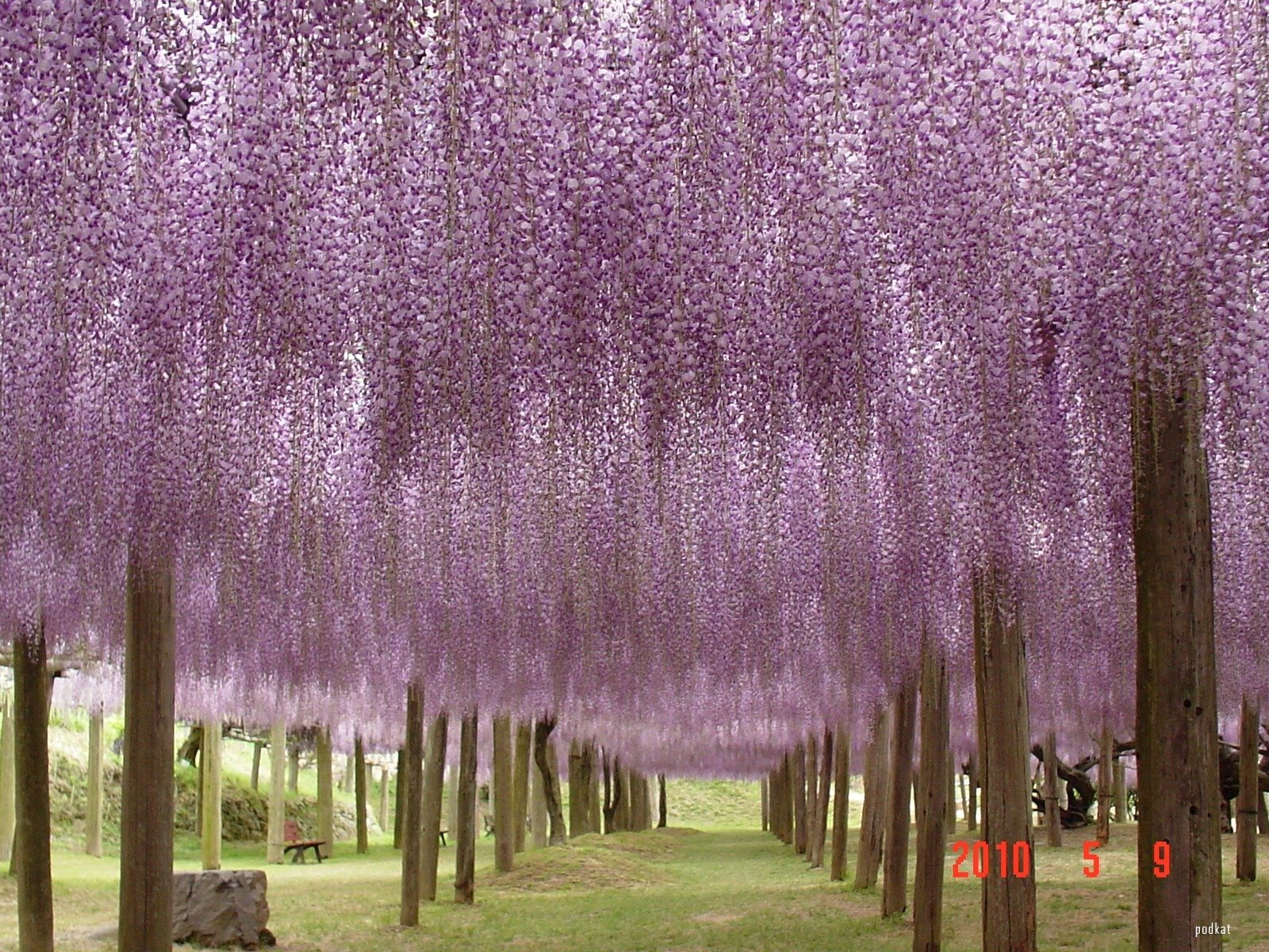 Eclectitude wisteria tunnel kawachi fuji gardens japan for The wisteria