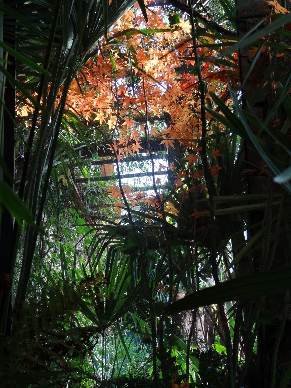 Jardin de b signoles couleurs de novembre - Jardin novembre ...
