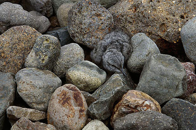 Animal Camouflage Pictures