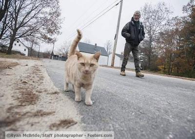 Seekor kucing setiap hari menemani pemiliknya berangkat kerja hingga pulang kerja