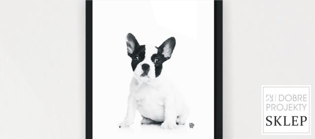 http://www.dobreprojekty-sklep.com/grafiki-napisy/128-francuski-bulldog-szczeniak.html