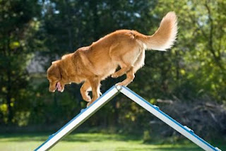 Techniques to Training your dog